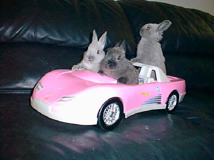 baby bunnies   days 22   29
